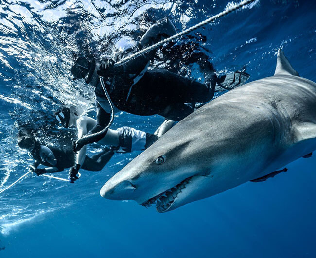 An image of divers in the water on board a Florida Keys Shark Diving trip.