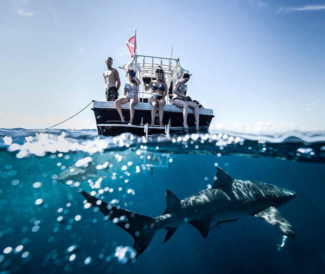 An image of a shark in the water with a Keys Shark Diving boat above the surface.