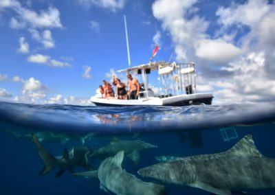 An image of a keys shark diving adventure with guests watching sharks.
