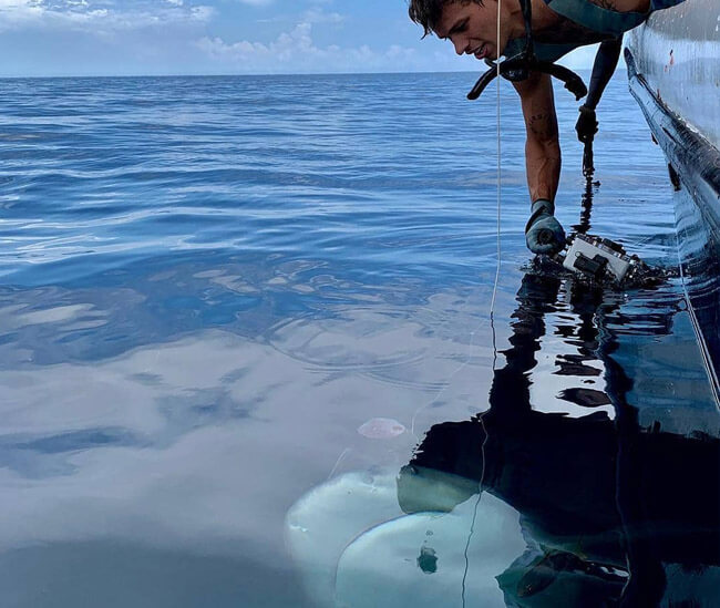An image of a guest interacting with a powerful shark on a Florida Keys Shark Viewing trip.