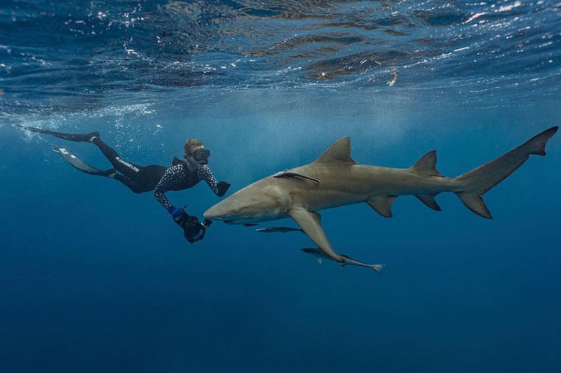 An image of a woman diver in the water with sharks off of the coast of Florida.