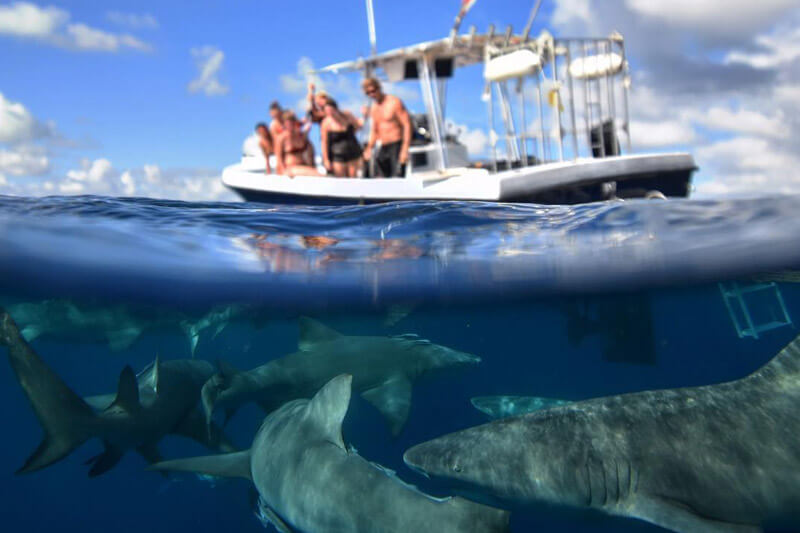 An image of guests aboard a keys shark diving tour viewing sharks below the surface of the ocean.